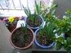 Narcissus090219